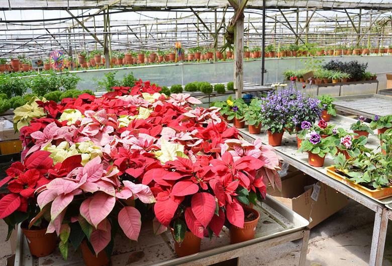 花卉温室大棚建设