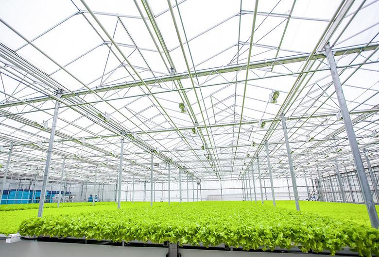 青海蔬菜温室大棚建设的保护措施