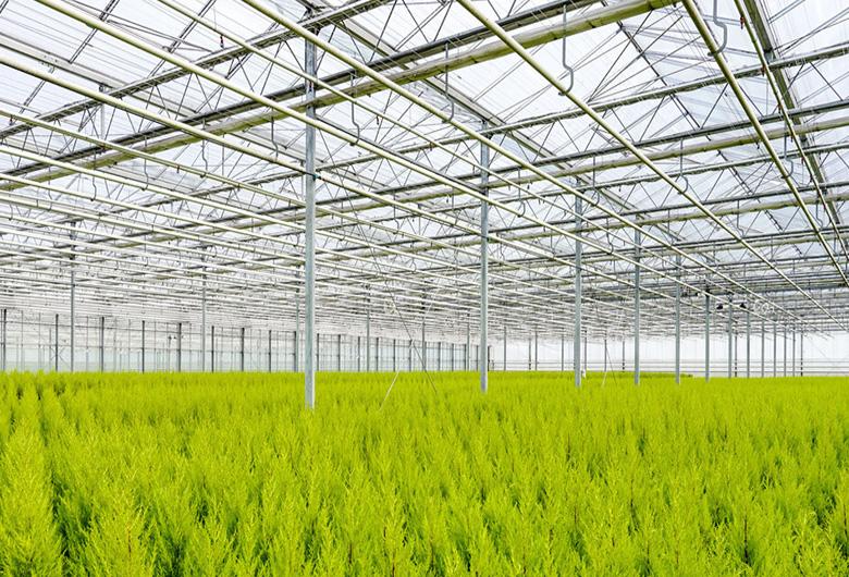 青海玻璃温室大棚的降温方法都有哪些呢?