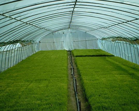 博瀚农业分享温室大棚结构形式不同,选择也有所不同