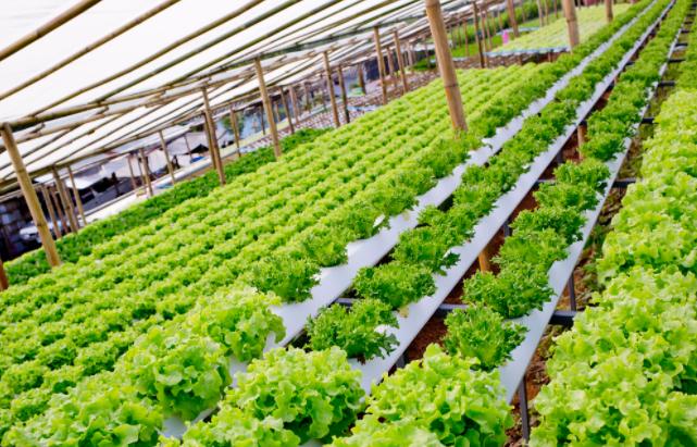 淺析農業溫室大棚如何種植蔬菜瓜果