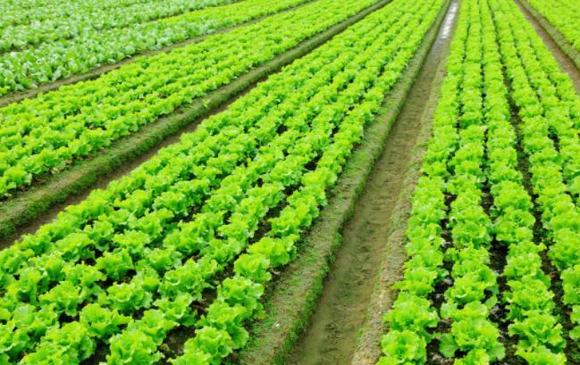 小型蔬菜温室大棚