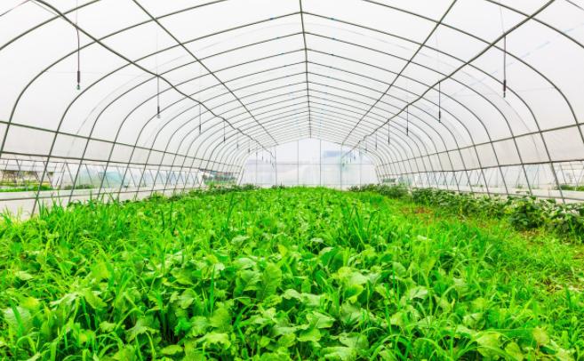 【博瀚農業】分享提升蔬菜溫室大棚采光率的方法