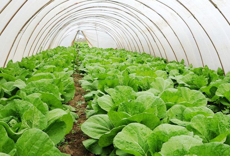 青海蔬菜温室大棚