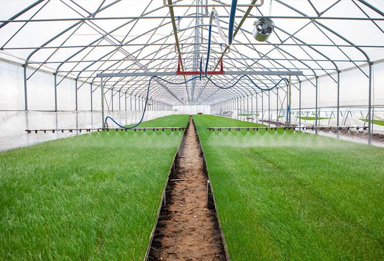 关于蔬菜温室大棚的骨架结构您了解多少呢?