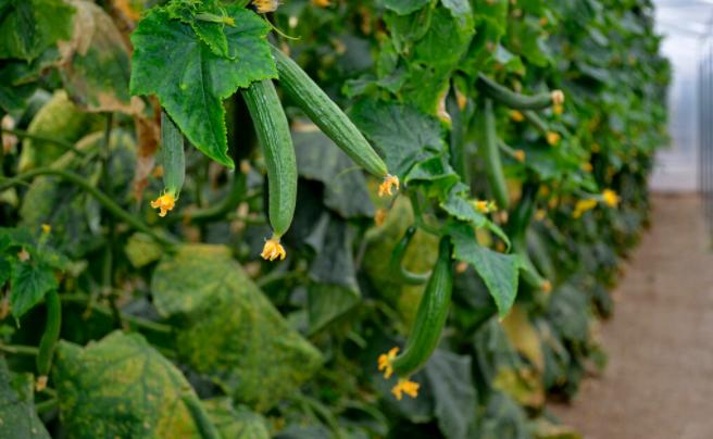 温室大棚种植