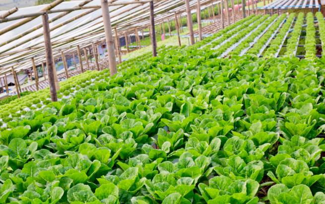 蔬菜温室大棚设计中的三大影响因素
