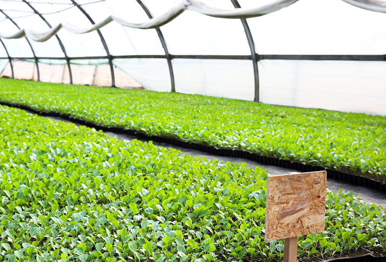 合理灌溉可以提高蔬菜健壮生产和产量