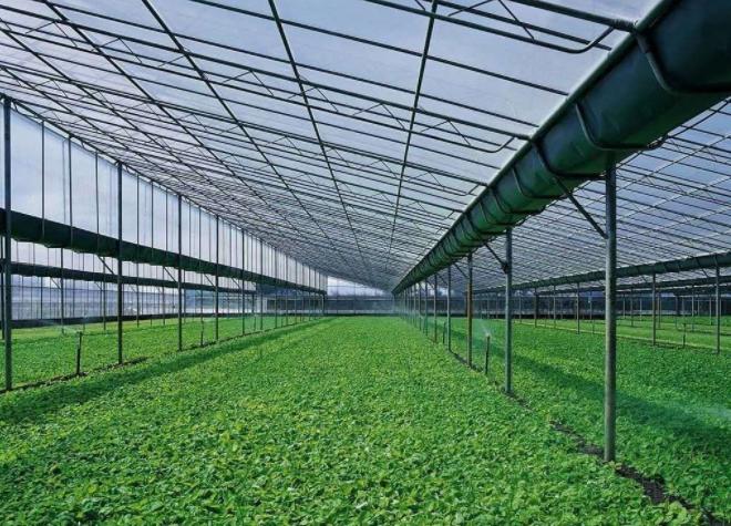 蔬菜温室大棚的方向决定蔬菜的产量