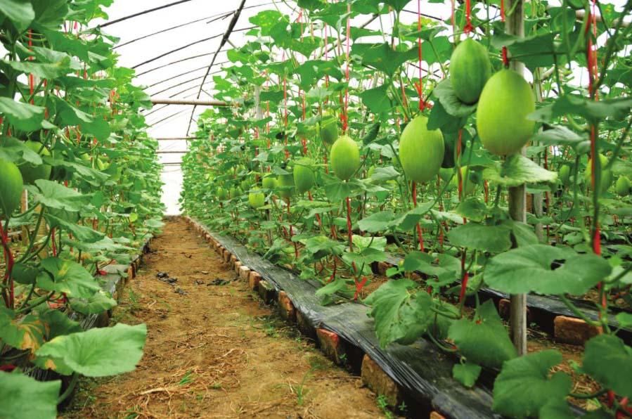 水果温室大棚