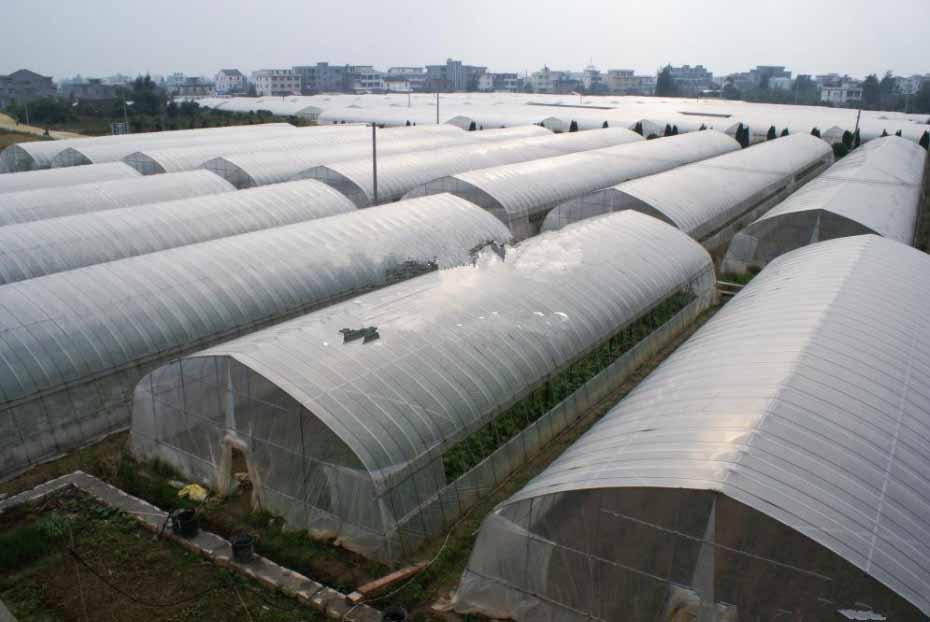 大型温室大棚