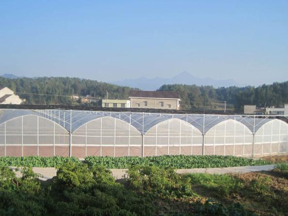 智能连栋玻璃温室