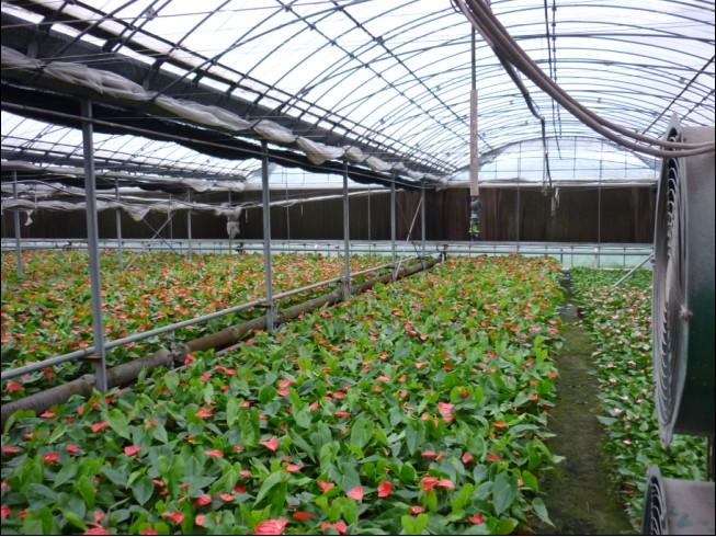 养花温室大棚