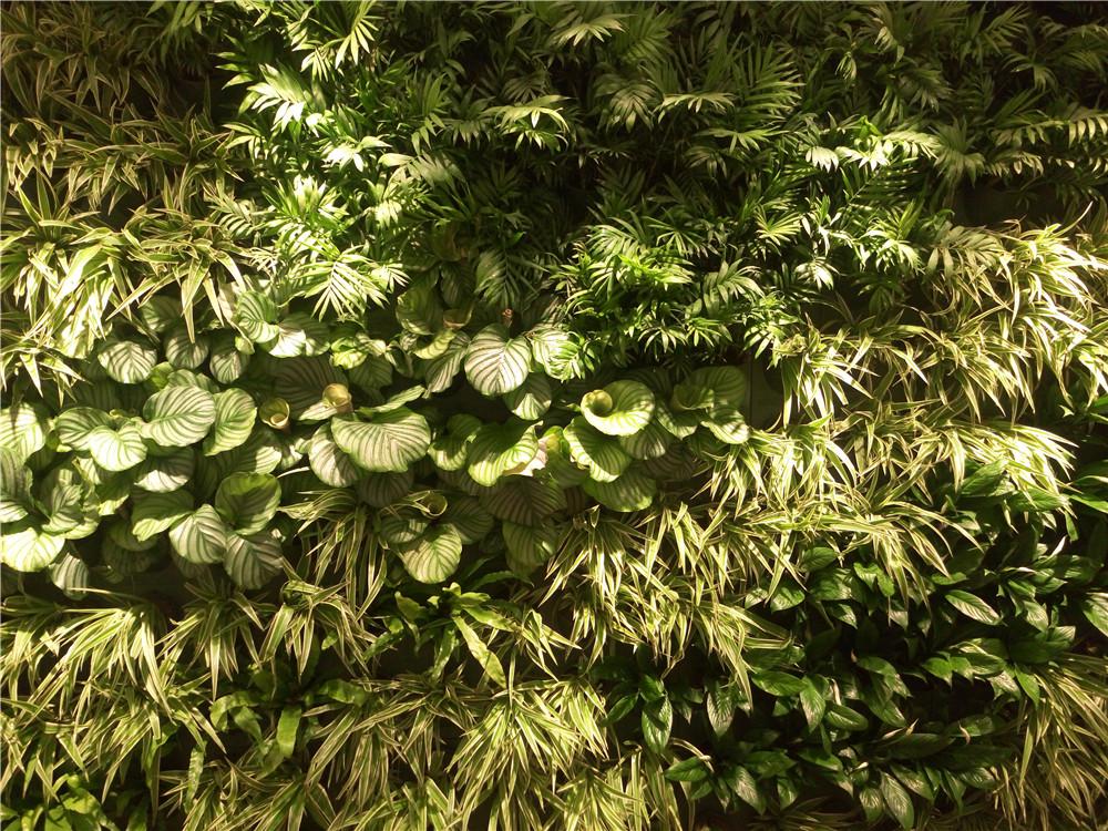 仿真植物墙施工