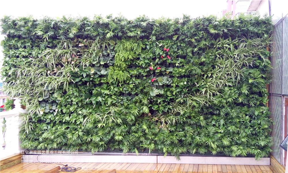 沈阳绿植背景墙