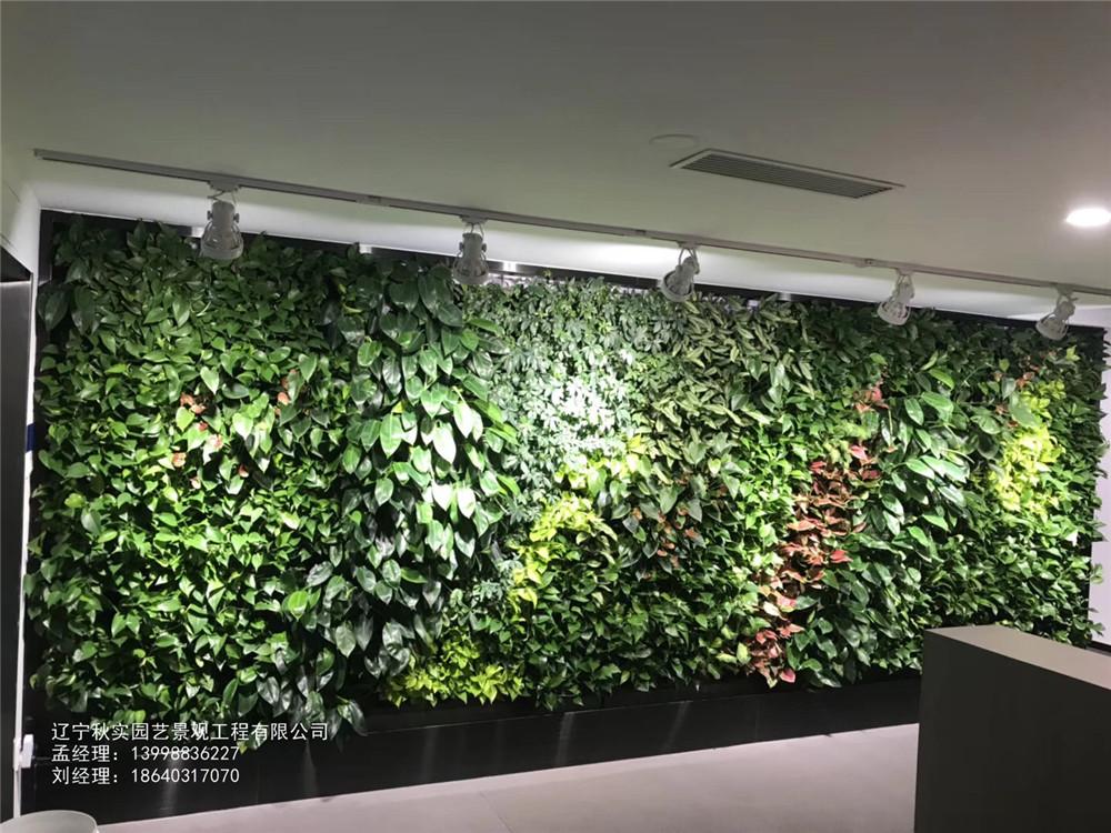 沈阳生态植物墙