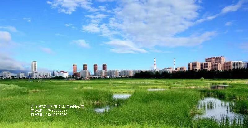 五色草景观