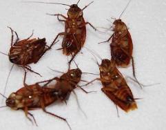 灭蟑螂公司