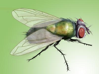 重庆灭苍蝇公司