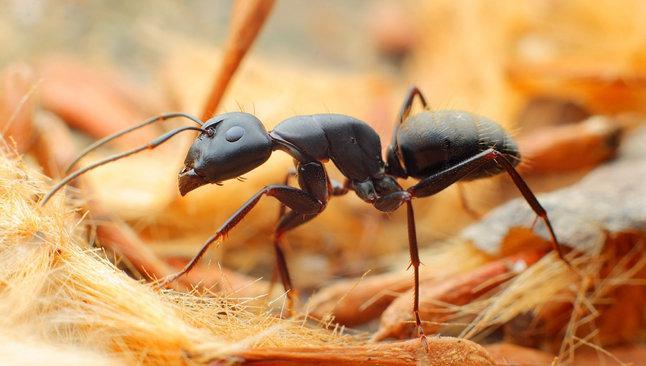重庆灭蚂蚁方法