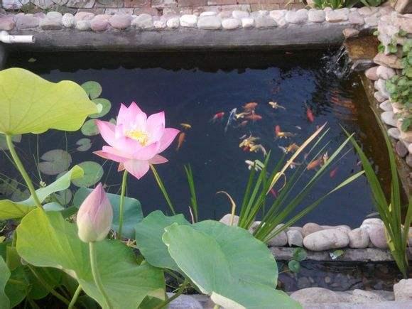 庭院假山鱼池自然水系景观