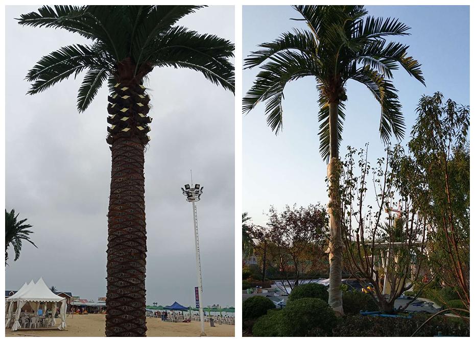 成都室外仿真椰子树