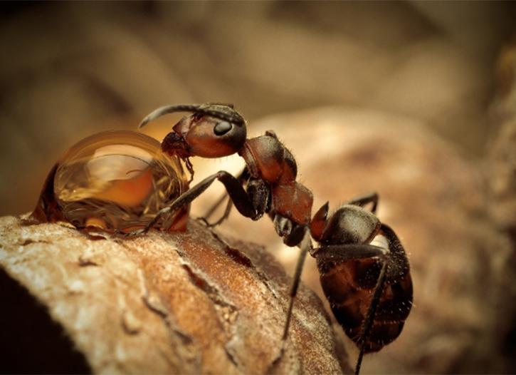 仁寿白蚁防治