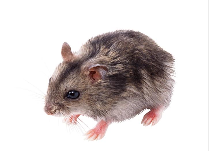 仁寿超市灭鼠
