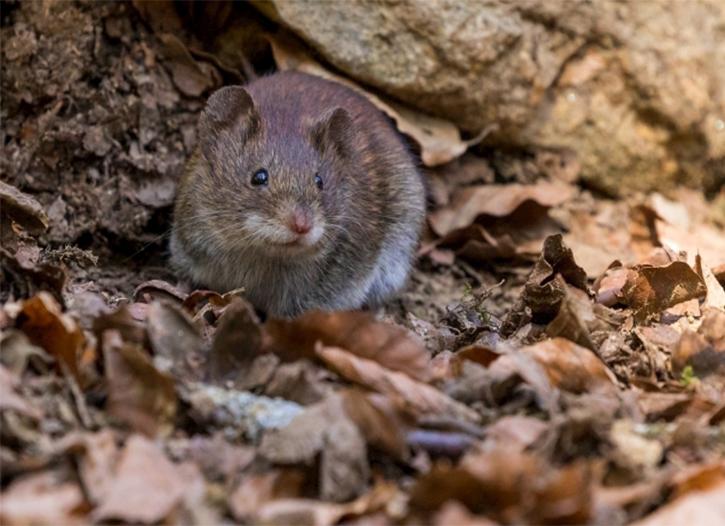 聚泽源有害生物防治公司在仁寿小区进行灭鼠防治