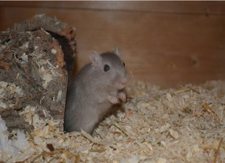 仁寿灭鼠防治