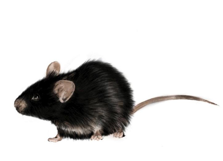 眉山灭鼠公司负责人讲解家庭使用捕鼠器灭鼠的操作