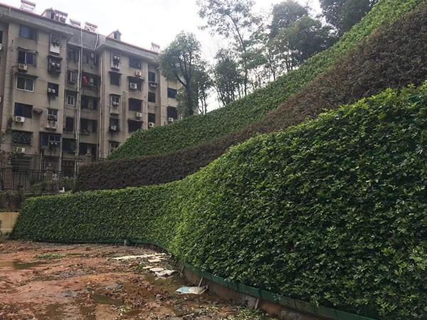 福州室内植物墙