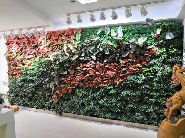 福建植物墙