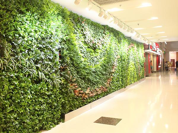 福州校园植物墙