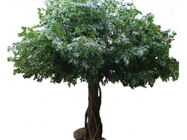 福州仿真榕树