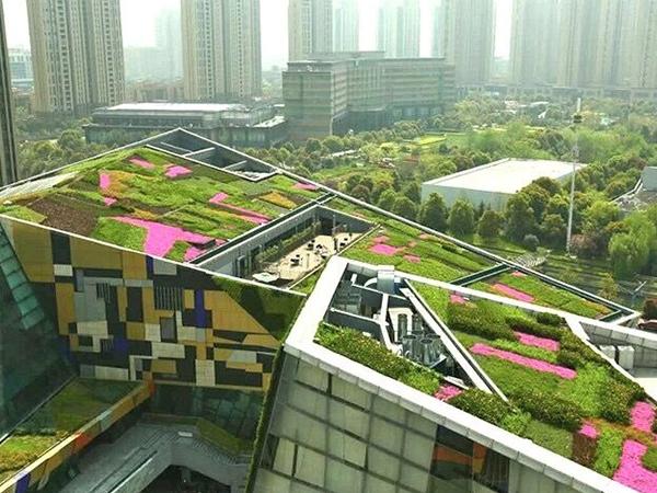 斜坡屋顶绿化
