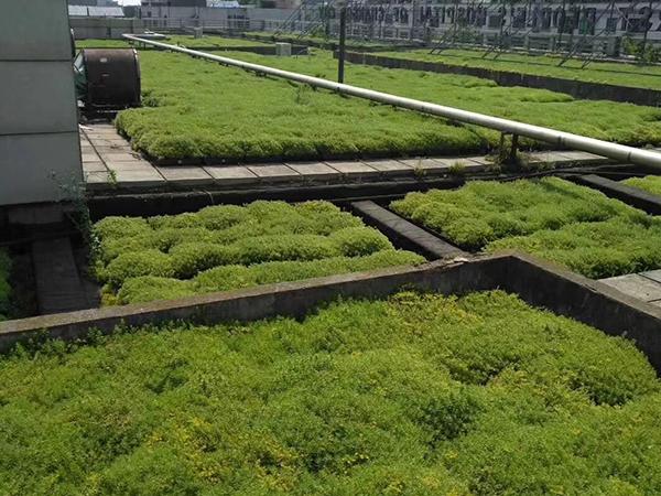 室外屋顶绿化