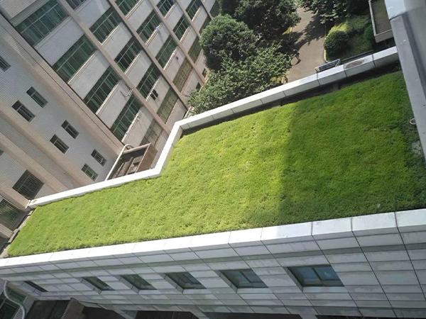 屋顶墙体绿化
