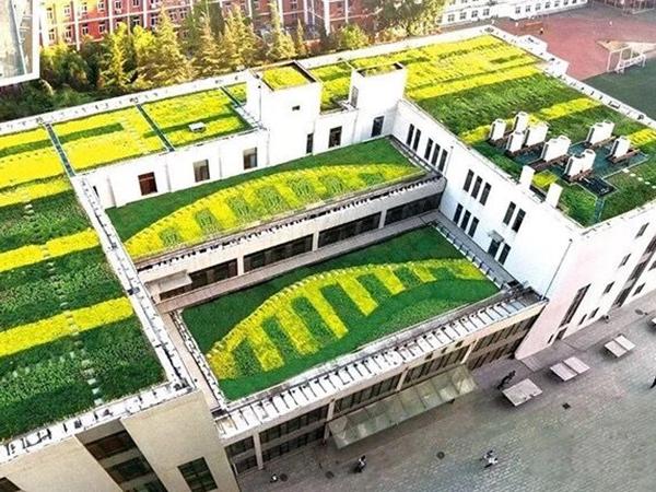 屋顶绿化改造