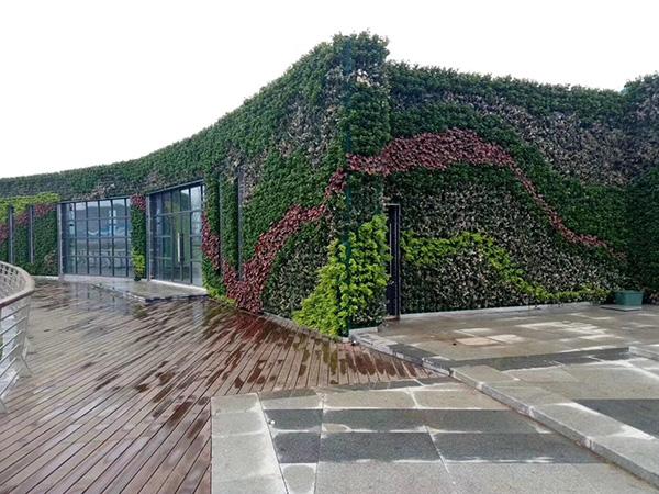 墙体植物墙