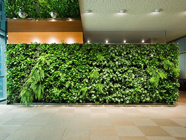 学校植物墙