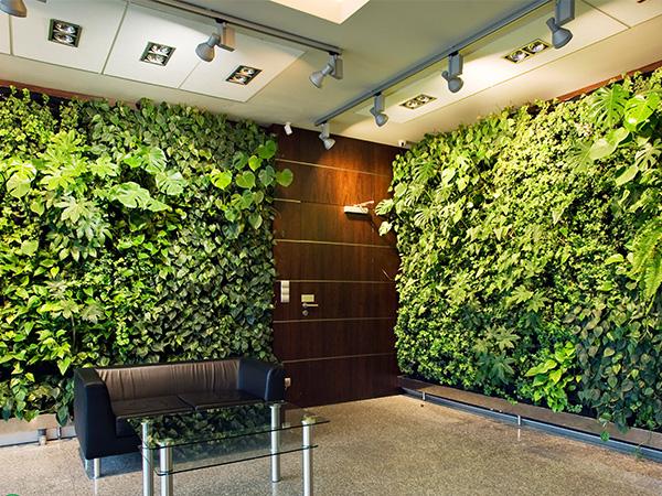 售楼处植物墙