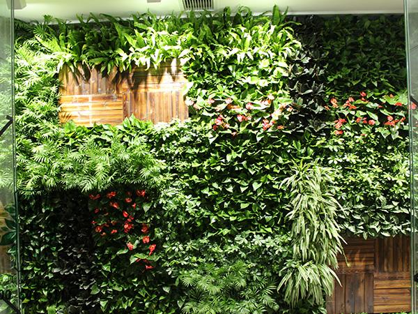 自动绿植墙