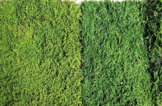 福州苔藓墙