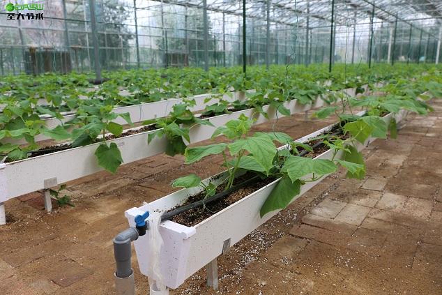 圣大节水施肥机助力寿光菜博会水肥一体化改造