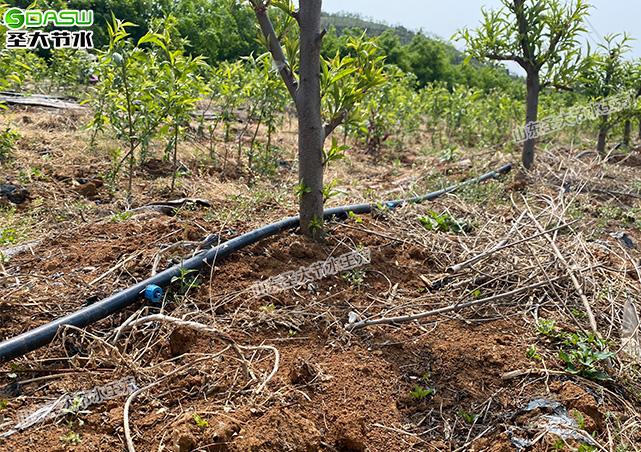 果树灌溉方式之PE管加滴头