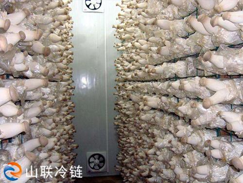 鲜菇保鲜库