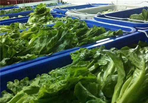 重庆蔬菜配送公司配送蔬菜知识