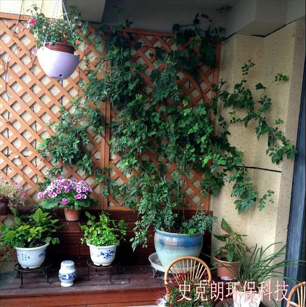 阳台上养花与地面庭院种花相比有许多不同之处,要养好必须注意下面几点: 1.温度阳台一般是水泥的地面和墙壁,当阳光照射时由于水泥的反射,温度升高,特别是朝西阳台,下午日偏时,阳台上充满阳光,温度明显升高,这种辐射对生长不利,因此可在阳台上洒水,当水分蒸发时可带去一部分热量。 2.