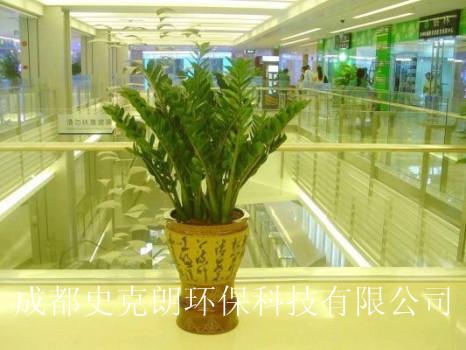 成都高新区植物租摆公司为您推荐吉祥聚财绿植